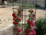 Кованя цветочника для сада